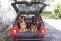 Beky a Bilbo v autě